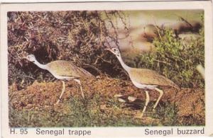 Trade Card Dandy Gum Wild Animals H 95 Senegal Buzzard