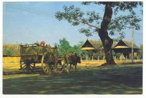 Thailand 60-70s   Bullock-Drawn Wagon, rural Northern Thailand