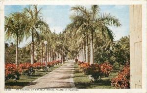 Palm Beach Florida~An Avenue of Stately Royal Palms~We Drove Thru~1946 Postcard