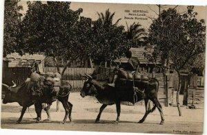 CPA AK Senegal-Saint Louis-Boeufs Porteurs (235372)
