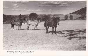 RP; Horse, Greetings from MOUNTAINVILLE, New York, 30-40s