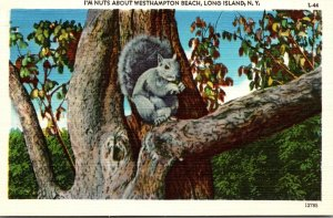 New York Long Island Squirrel In Tree I'm Nuts About Westhampton Beach