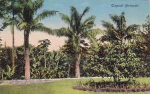Garden, Tropical Bermuda, 1900-1910s