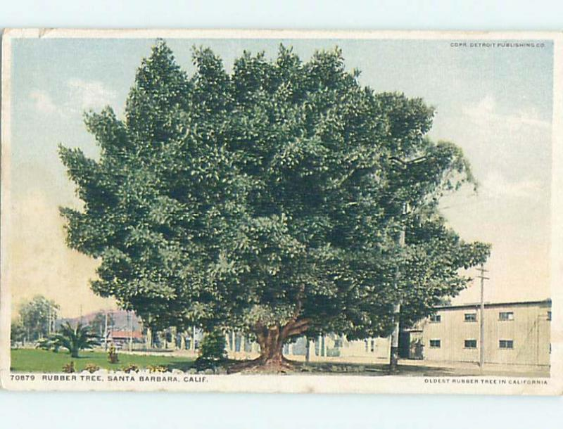 Unused Divided-Back RUBBER TREE Santa Barbara California CA HM8248