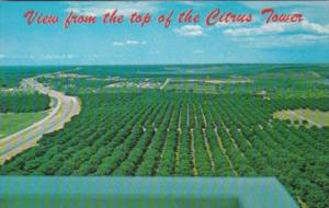 Florida Clermont View From The Top Of The Citrus Tower Orange Groves Along U ...