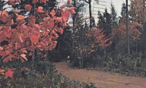 #7 to #8 hole Golf Course path, Brudenell, Montague , P.E.I. , Canada , 40-60s