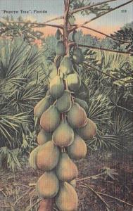 Papaya Tree In Florida