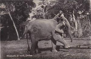 Ceylon Sri Lanka Tame Elephant At Work Real Photo