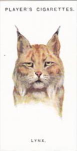 Player Vintage Cigarette Card Wild Animal Heads 1931 No 36 Lynx