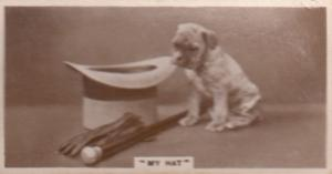 Dog Fred Astaire Top Hat Walking Stick Antique Real Photo Cigarette Card