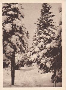 Piste De Ski Sous Bois Au LAC-BEAUPORT, Quebec, Canada, 1910-1920s
