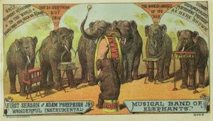 1880's Adam Forepaugh's Circus, Musical Elephant Band Trade Card P113