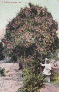 A California Rose Tree, California, 00-10s