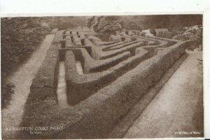 Middlesex Postcard - Hampton Court Palace - The Maze - Ref 12153A