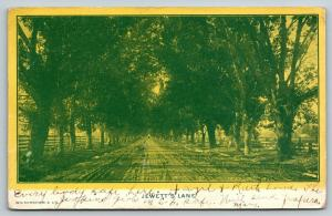 Bakersfield CA~Jewett's Lane~Rutted Dirt Road Thru Trees~Fences~1906 All Safe