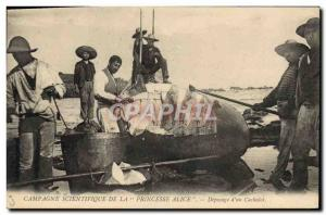 Old Postcard Campaign scientific Princess Alice butchering d & # 39un cachelo...