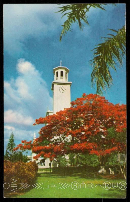 The Poinciana regia trees - Cathedral Tower