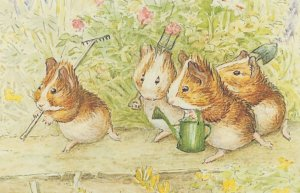 Cecily Parsleys Nursery Rhymes Beatrix Potter Guinea Pigs Postcard