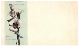 Utah Ogden , Souvenir , Sego Lily state flower