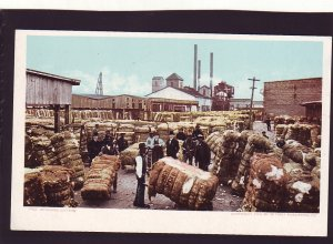 P1589 old unused postcard workers weighing cotton bales