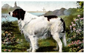 Dog   Saint Bernard