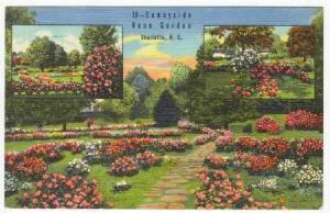 Sunnyside Rose Garden, Charlotte, North Carolina, PU-1951