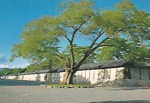 POSTAL 53185: KYOTO. Palacio imperial