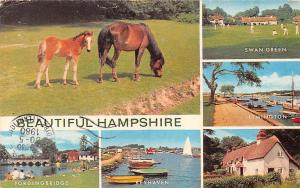 Hampshire, Horses Wan Green Lymington Harbour Boats Keyhaven Fordingbridge 1980