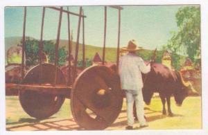 Carreta De Bueyes, The Typical Oxcart, Mexico, 1910-1920s