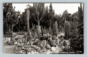 RPPC of Edinburg TX-Texas, Section Of Cactus Garden, c1947 Postcard