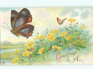 Pre-Linen Butterfly close-up BEAUTIFUL LARGE BUTTERFLIES AC5796