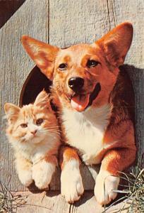 Close Friends - Dog and Cat
