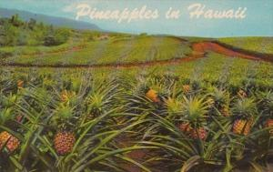 Hawaii Typical Pineapple Field