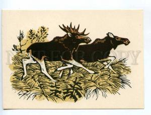 238757 RUSSIA HUNT Zakharov Elk old engraving postcard