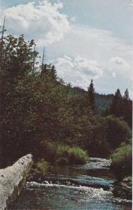 Carpenter Creek near St Maries, Idaho