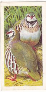 Trade Card Brooke Bond Tea Wild Birds in Britain 23 Red-Legged Partridge