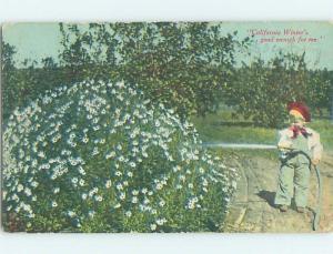 Divided-Back BOY LIKES WINTER Postmarked Sausalito California CA HM6719