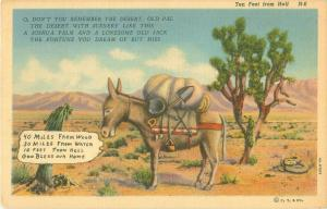 Ten Feet From Hell, Donkey in Desert, 50 Miles from Water Comic Postcard