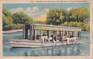Florida Silver Springs Feeding Fish From Glass Bottom Boat At Silver Springs ...