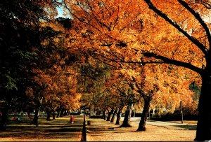 New Zealand Queenstown Glimpse Of Skyline Chalet Through Autumn Trees