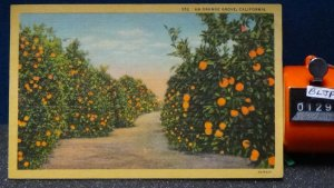 STD Vintage An Orange Grove Unposted Linen c1931 California