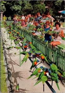 Birds The Sanctuary Currumbin Beach Queensland Australia Vintage Postcard D46