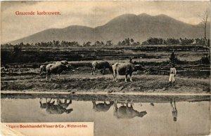 CPA INDONESIA Grazende karbouwen (341452)
