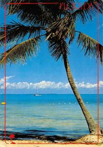 USA Florida Tropical Coconut Palm Trees Beach Boat