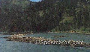 Log Drive - Clearwater River, Idaho ID