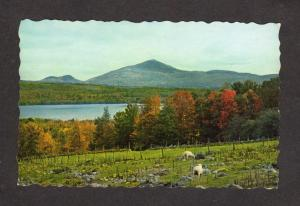 ME Lake Webb Sheep Mt Blue Mountain WELD MAINE Postcard