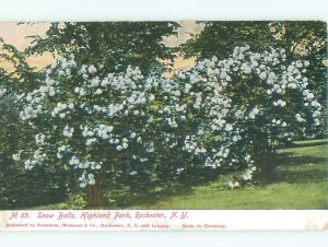 Pre-1907 PARK SCENE Rochester New York NY AF7649