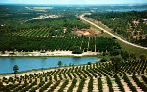 Florida Clermont Citrus Groves From Citrus Tower 1976