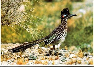 New Mexico State Bird The Road Runner
