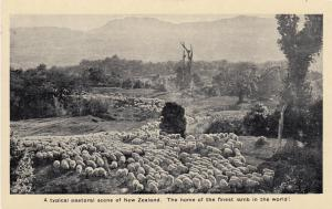 NEW ZEALAND, 30-50s; Typical pastoral scene,Home of the finest lamb in the world